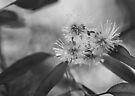 GumBlossoms by Pene Stevens