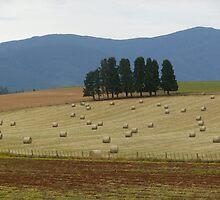 Harvesting time Scottsdale Tasmania by Carol Peck