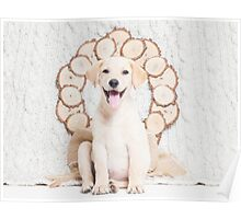 Lab Puppy with Christmas Wreath On a Cable Knit Blanket -Animal Rescue Portraits Poster