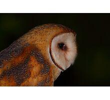 Barn Owl Profile Photographic Print