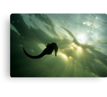 Seahorse (Hippocampus sp.), silhouette, underwater view Canvas Print