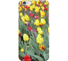 Red and Yellow Tulips in Spring iPhone Case/Skin