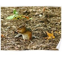 Little Chipmunk in the Fall Poster