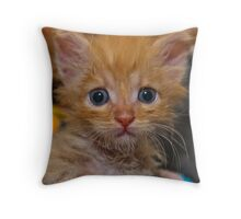 Kitty - Surprised and scared at the same time Throw Pillow