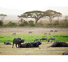 Safari of Kenya. Photographic Print
