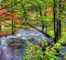 Autumn's Rush by Monica M. Scanlan