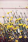 Dandelion Jewels by Carol Knudsen