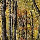 The Fall Forest by Tracy Wazny