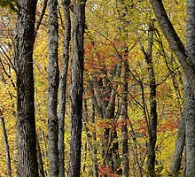 The Fall Forest by Tracy Faught