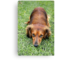 A Dog Looking Sorry Canvas Print