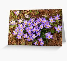 Crocus Crop Greeting Card