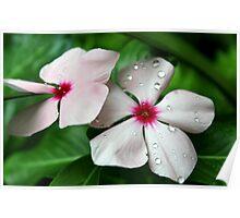 Flower Droplets Poster