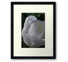 Softly the tulip in Spring Framed Print