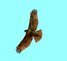 Red-Tailed Hawk by Larry Trupp