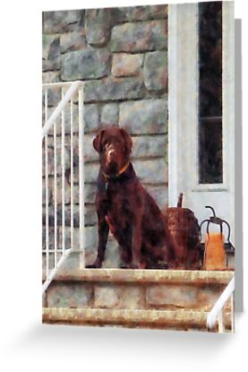 Chocolate Labrador on Porch by Susan Savad