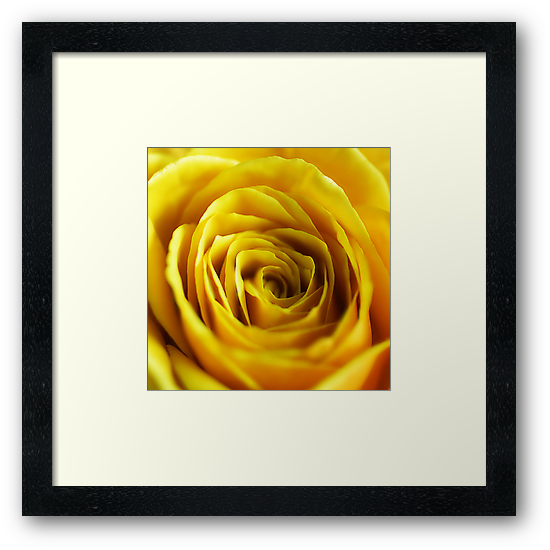 Colour Of Life XIV [Print & iPad Case] by Damienne Bingham