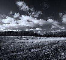 Meadow in November by Mitch Labuda