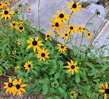 Sunny Spots by Deborah Crew-Johnson