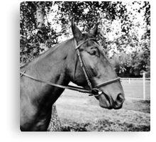 Horse in bridle portrait Canvas Print