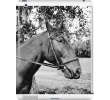Horse in bridle portrait iPad Case/Skin