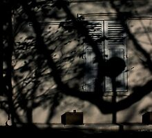 Shadows were swallowing the city giving birth to a new world...... by 1more photo