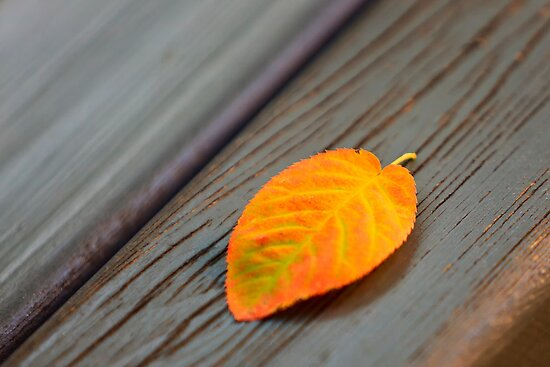 Bench Leaf by Delfino