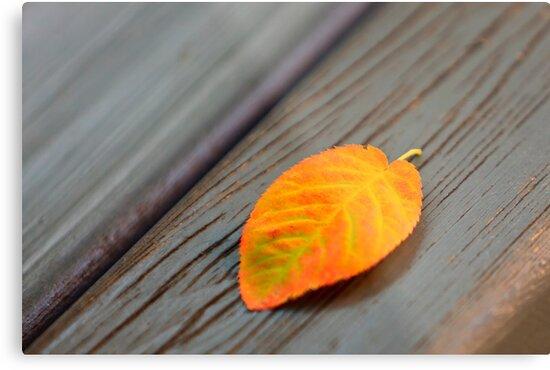 Bench Leaf by Delfino