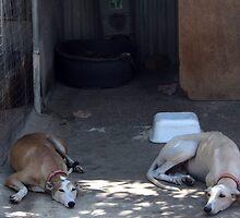 Rescue shelter in Villa del Rio, Spain by homesick