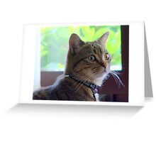 Wide eyed! Greeting Card
