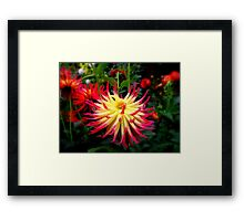 Spikey Flower Framed Print