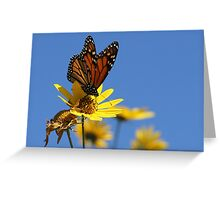 Monarch, and Clear Blue Sky Greeting Card