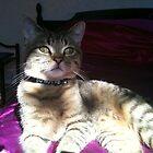 Sunlight dancing on Boris! by weecritter