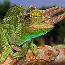 Jackson's Chameleon by Henry Jager
