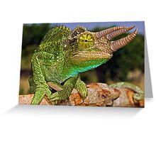 Jackson's Chameleon Greeting Card