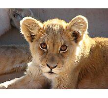 Lion cub Photographic Print