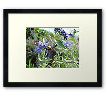 Rumble Bumble Framed Print