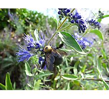 Rumble Bumble Photographic Print