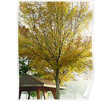 Yellow Tree Poster