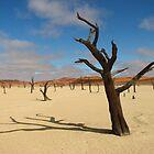 Dead camelthorn trees in Deadvlei, near Sossusvlei, Namib-Naukluft National Park, Namibia, Africa by jmccabephoto