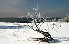 Ice Covered Tree By Lake by Carolyn  Fletcher
