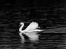Swan (B&W) by Artberry