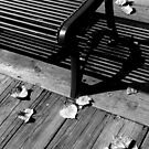 Leaves and Bench by jrier