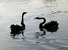 Black Swans Greeting by Artberry