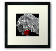A Touch Of Red - Selective Coloured Begonia Framed Print