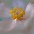 Autumn Anenome by enchantedImages