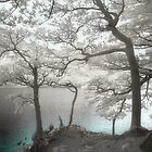 Buttermere Trees by Denise McDonald