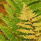 Fall ferns by Mundy Hackett