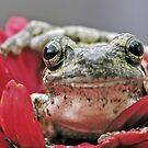 Gray treefrog IV by Mundy Hackett