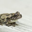 Gray tree frog V by Mundy Hackett