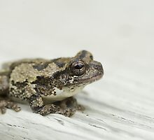 Gray tree frog V by Mundy Hackett